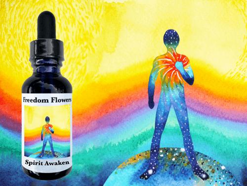 Do Essences Help Your Spirit? - Freedom Flowers